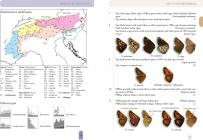 Butterflies and Burnets of the Alps and their larvae, pupae and cocoons