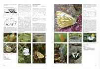 Schmetterlinge und ihre Lebensräume