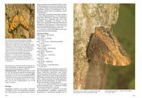 Die Schmetterlinge Baden-Württembergs