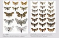 Motyle nocne Polski. Macrolepidoptera część I