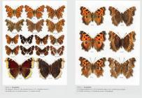 Motyle dzienne Polski