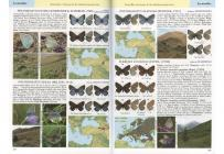 Butterflies of Europe & the Mediterranean area
