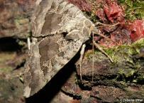 Výskum motýľov pomocou lákania na vnadidlo