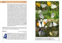 Motýli a housenky střední Evropy
