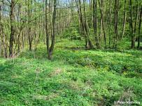biotop (Považský Inovec)
