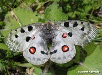 samica (Strážovské vrchy)