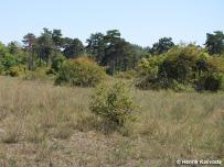 biotop (Podunajská rovina)