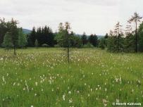 biotop (Liptovská kotlina)