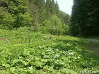 biotop (Nízke Tatry)