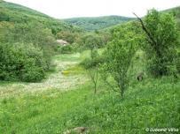biotop (Biele Karpaty)