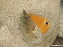 samica (Považský Inovec)
