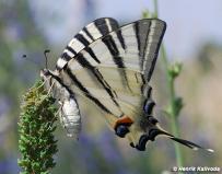 samica (Malé Karpaty)