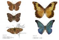 Sbíráme motýly