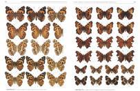Die Gross-Schmetterlinge Deutschlands / The Macrolepidoptera of Germany
