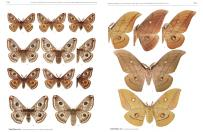 Die Gross-Schmetterlinge Deutschlands / The Macrolepidoptera of Germany