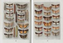 Poznávajme motýle
