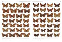 Magyarország nagylepkéi / The Macrolepidoptera of Hungary