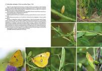 Motyle dzienne Polski, Atlas bionomii